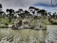 The waterways in Camargue #Impressive_Art