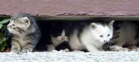 Venice waking kittens