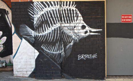 Humanity - Newcastle, Australia