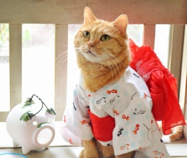 E7 8c Ab E3 81 A0 E3 81 A3 E3 81 A6 E6 B5 B4 E8 A1 A3 E3 81 8c E7 9d 80 E3 81 9f E3 81 84 E2 99 Aa Cats Yukata An Informal Cotton Kimono For Summer