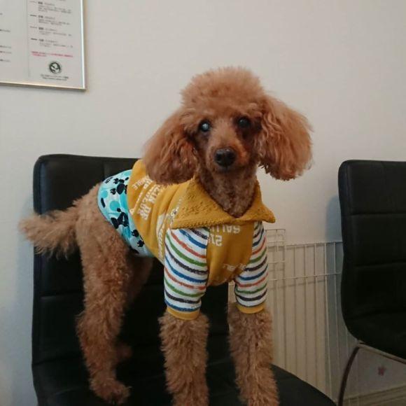 愛犬の健康寿命をサポートするマッサージ_a0286340_23262814.jpg