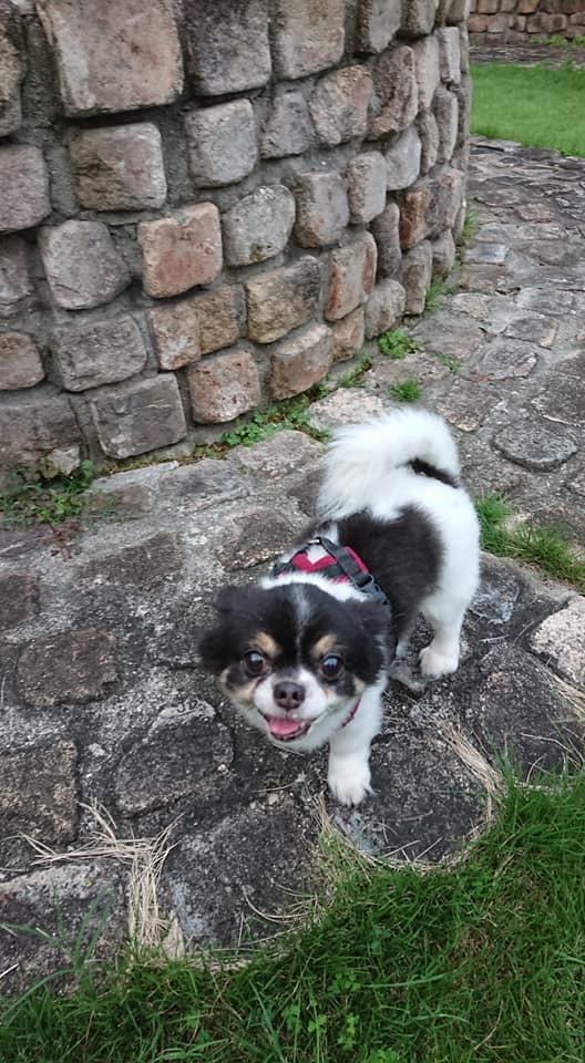 犬と泊まれるペンション モッキングバード_a0286340_11203860.jpg