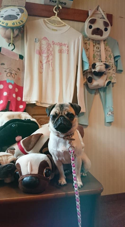犬と泊まれるペンション モッキングバード_a0286340_11365007.jpg