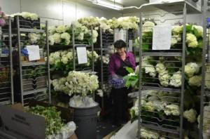 cut-flower-distribution
