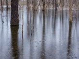 Beaver Activity Flooded Woods, Now Frozen For Winter