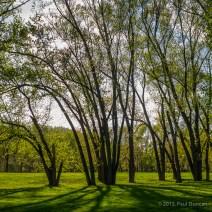 Tree Grove at Hickories Park in Owego, NY