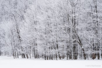 Trees frosted with snow
