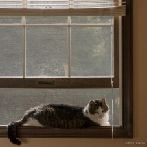 Mouse relaxes in an open window