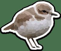 Snowy Plover Sticker