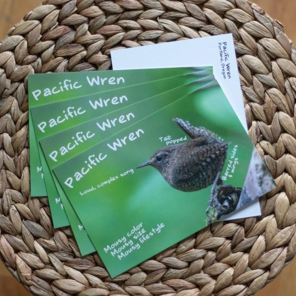 Pacific Wren infographic