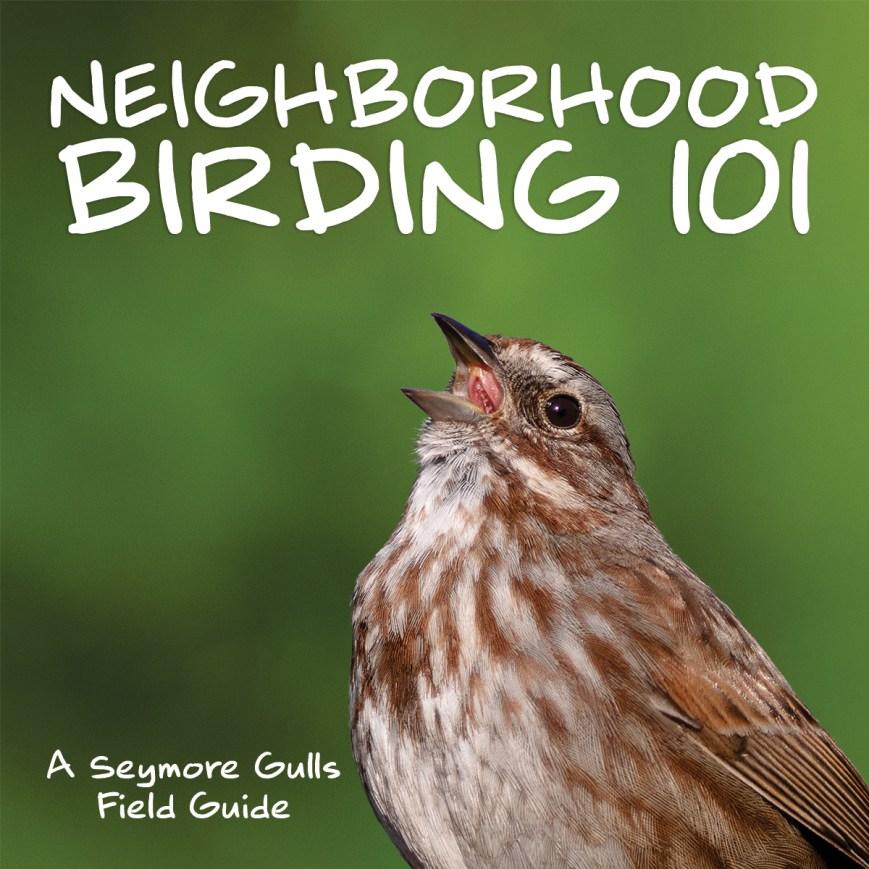 Neighborhood Birding 101 by Seymore Gulls