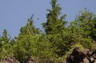 Hawks at Badger Creek