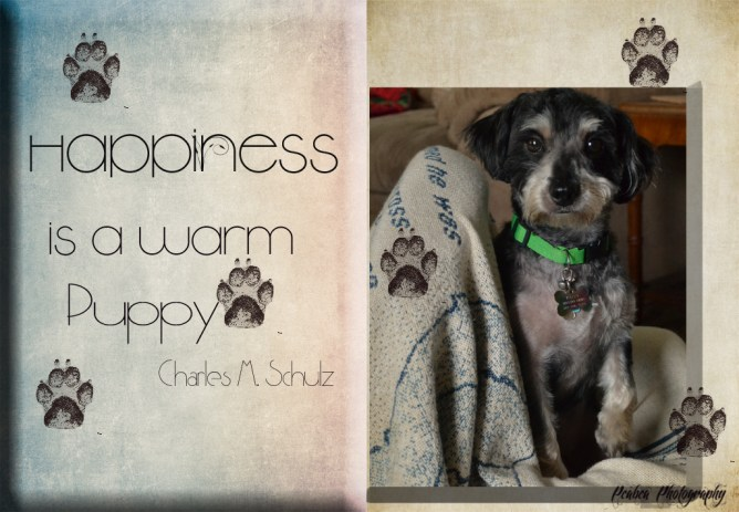 Happiness for quotography