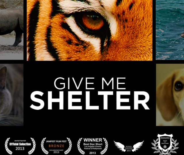 Give Me Shelter Is An Award Winning Documentary Uncovering The Most Prevalent Issues In The Animal World Through The Eyes Of The Individuals Dedicating