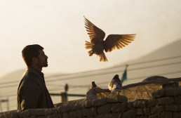 An Afghan man watches his pigeons after feeding them in Kabul, on March 8, 2012. (AP Photo/Anja Niedringhaus) #