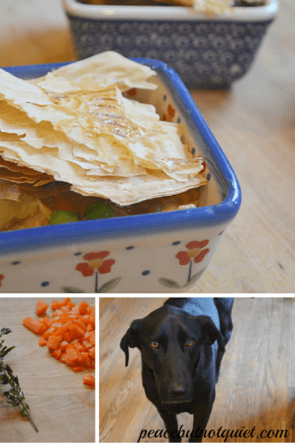 Rachael Ray Nutrish — and Our Awesome Dogs!