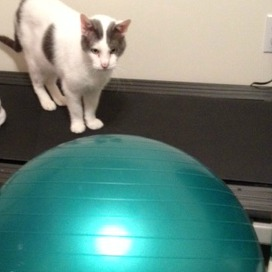 exercise ball with cat