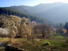Cherry Trees at the Mountain Retreat