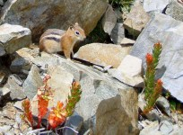 Little Chipmunk Friend