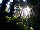 White Light on the Tan Bark Trail