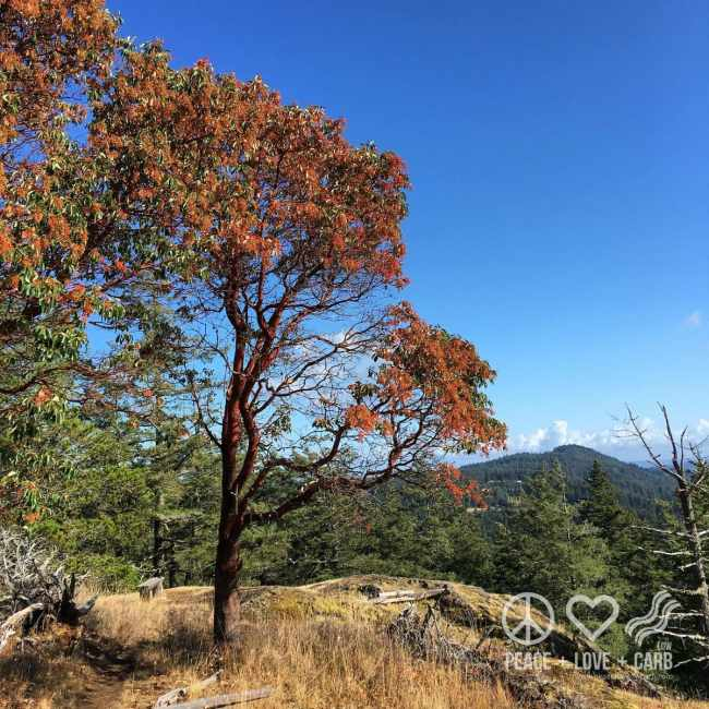 North Valley Lookout | Peace Love and Low Carb