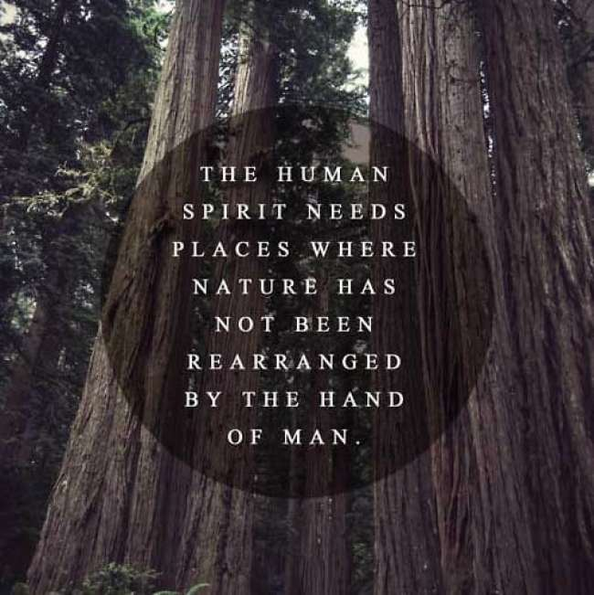 The Human Spirit Needs...