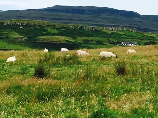 sheephighlands