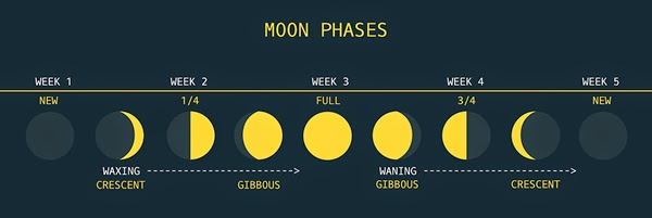 The Moon Cycle and Menstruation
