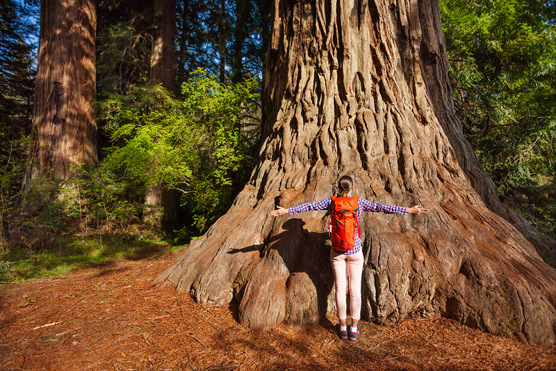 Month of Meditation: Root Chakra Exploration