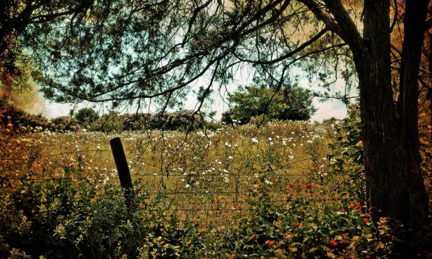 Christopher Woods – Five Photographs