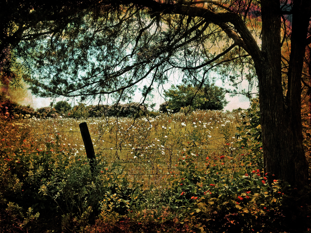 Afternoon, Field of Poppies by Christopher Woods