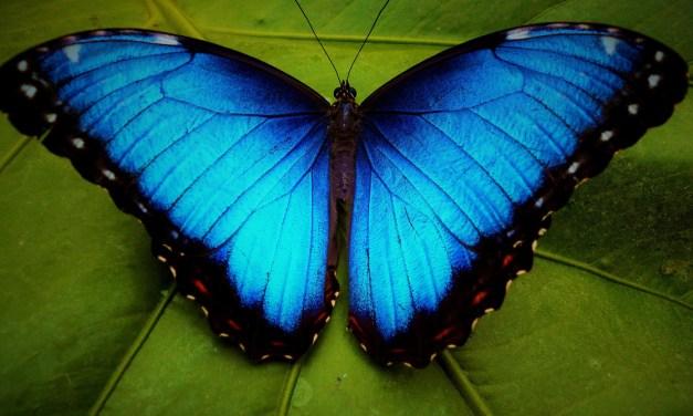 Lorraine Caputo – Five Poems