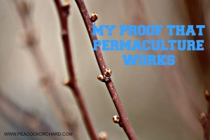My proof that permaculture works