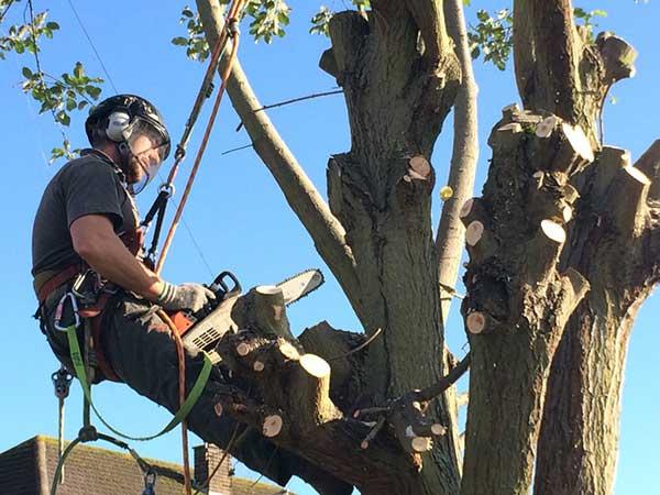 SEO For Tree Surgeons