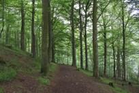 Our English 'bush' walk.