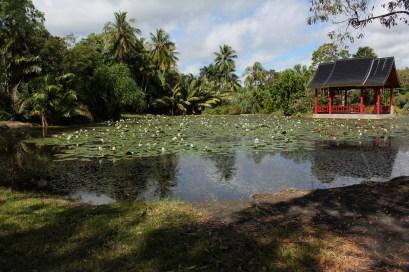 Cairn's Botanical Gardens