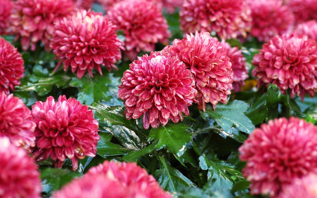 Top 5 Plants for Fall Color