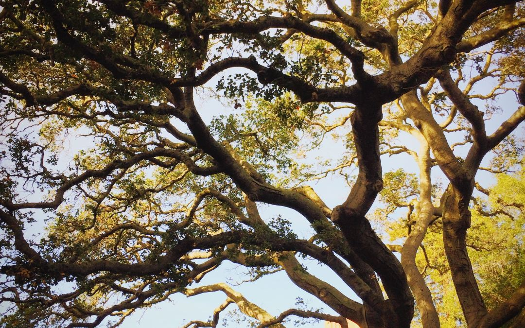 7 Great Reasons To Plant A Tree