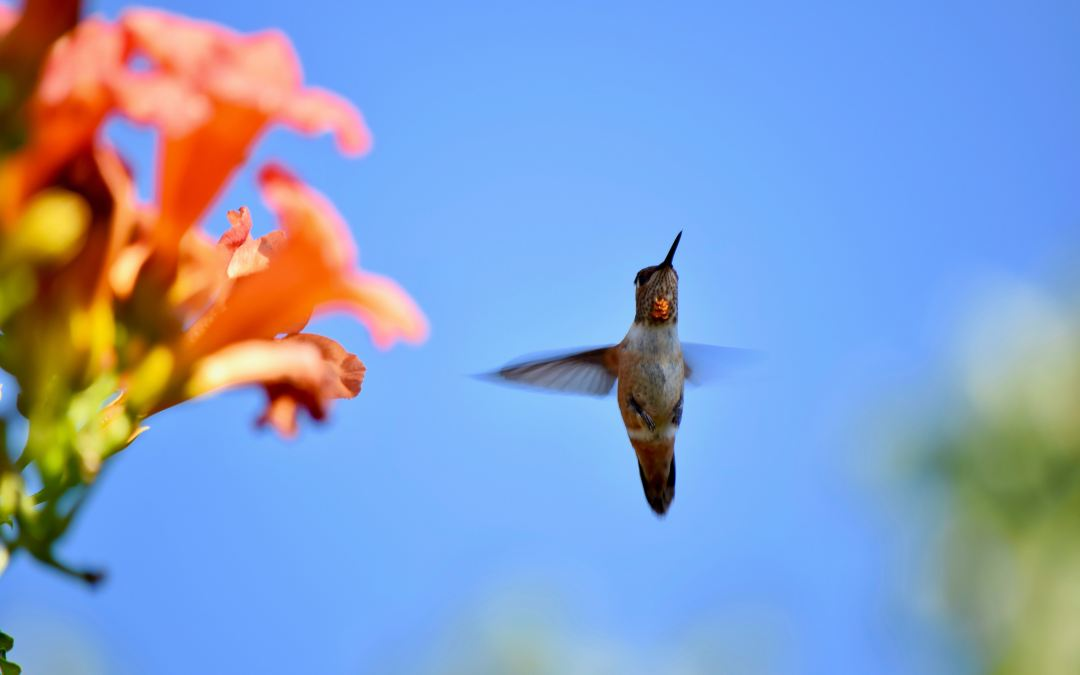 6 Plants To Attract Hummingbirds