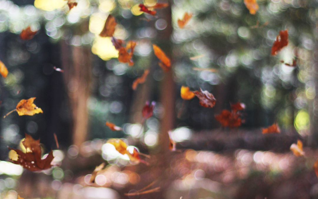 5 Reasons Why Fall Is the Best Time to Plant