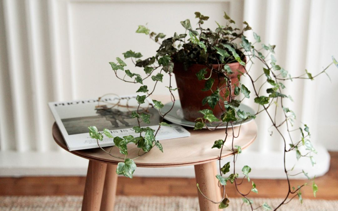 6 House Plants that Will Improve Your Sleep