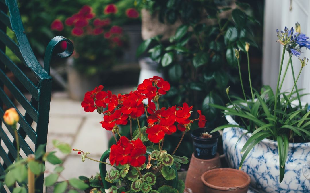 3 Simple Reasons to Buy From A Local Nursery