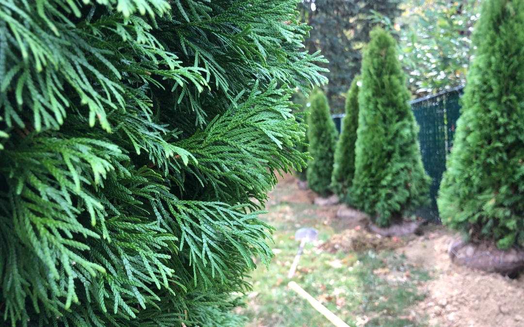 November Landscaping Maintenance Checklist