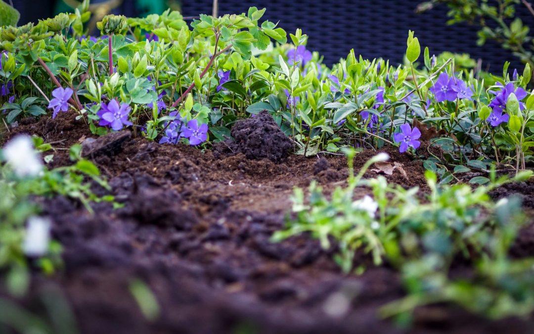 Growing a Garden From Scraps