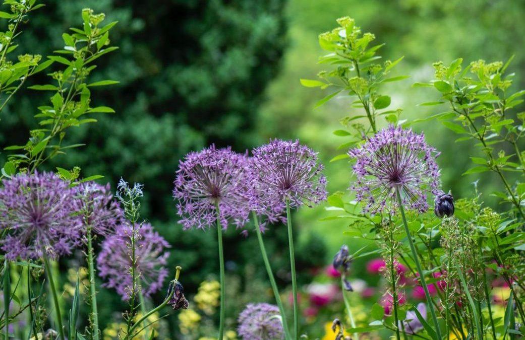 3 Simple Ways to Reduce Garden Allergies