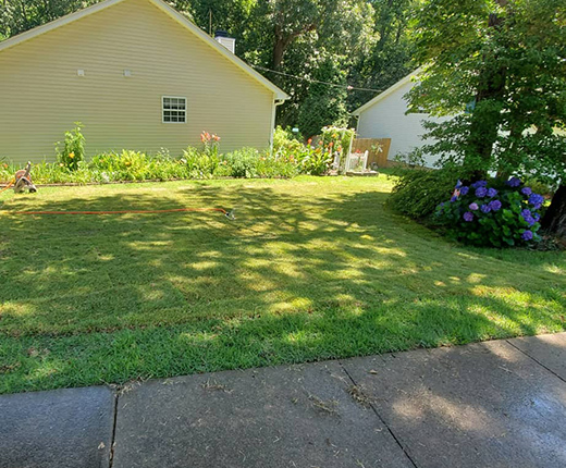 Sod Installation in Apex Neighborhood of Indian Trails