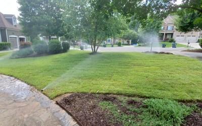 Choosing The Best Sod Type For My Lawn In 2021