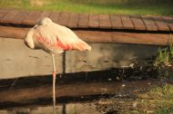 We followed the example of the flamingos and took a rest... not on one leg though...