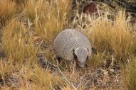 The armadillo was not shy at all. Nice little chap...