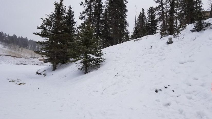 Peakview Cabin Pikes Peak Mountain Getaway - Neighborhood Sledding